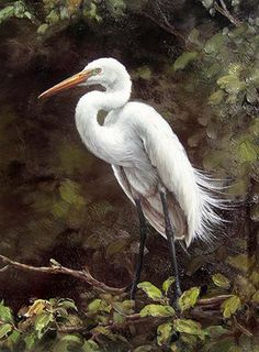 Realism art Oil painting nice animal white bird crane in forest view on canvas - Realism Art - Ideas of Realism Art Oil Painting Trees, Painting People, Oil Painting Abstract, Painting Wallpaper, Fish Artwork, Forest View, Pretty Animals, Animal Paintings, Art Paintings