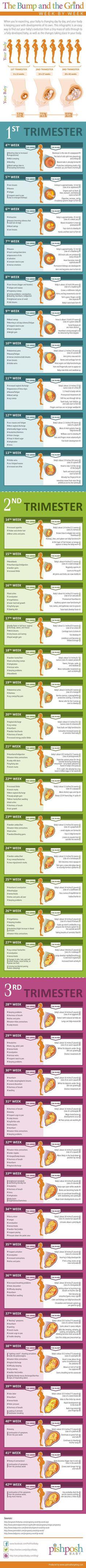 Pregnancy Week by Week Chart - Fun - - Schwanger - Pregnant Tips Pregnancy Chart, Pregnancy Info, Pregnancy Weeks, Early Pregnancy, Pregnancy Timeline, Pregnancy Trimester Chart, Pregnancy Health, Pregnancy Symptoms By Week, Pregnancy Facts