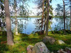 Walking in the wood in Kivijärvi