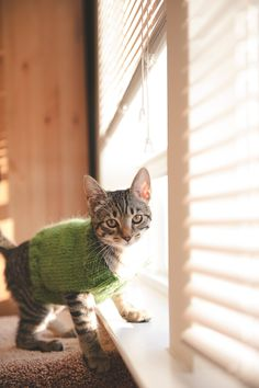 Pickles Barrington in her pickle-green sweater Cat Sweaters, Green Sweater, Pickles, Cute Pictures, Cute Animals, Swag, Ivory, Kitty, Board