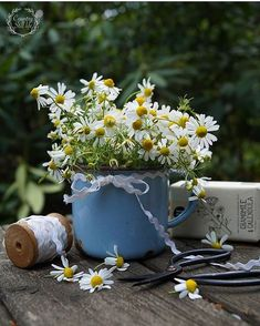 Daisy Love, Daisy Daisy, Water Flowers, Watering Can, Flower Vases, Still Life, Congratulations, Table Decorations, Canning