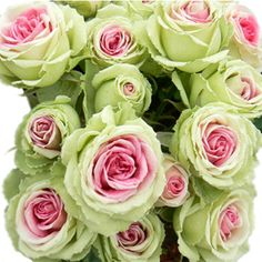 Pink and green roses. Gorgeous! Needed these at the wedding! I'll settle for some in my some day yard.