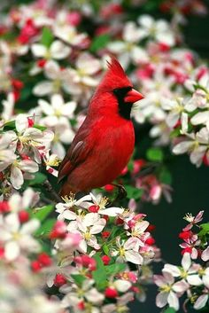 Cardinal - They say that a visit from a cardinal is actually your deceased love one letting you know that they are alright in Heaven!