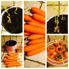 Compra le carote una volta e le avrai per sempre -     Compra le carote una volta e le avrai per sempre...  Sono una mamma proprio fortunata: il mio bimbo mi chiede per merenda sempre banane, mele o carote... si certo se qualcuno gli offre un ringo non …
