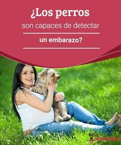 ¿Los perros son capaces de detectar un embarazo?  Los perros son capaces de detectar un embarazo. También pueden descubrir diversas enfermedades que padecen los humanos y anticipar algunos fenómenos naturales. #perros #detectar #embarazo #curiosidades