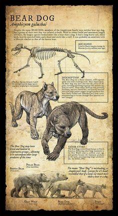Natural History Museum Signage | Part III on RISD Portfolios | Beth Zaiken