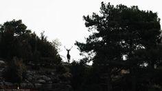 La zona de osos en el Hosquillo, Cuenca La berrea en Cuenca #Protección #Animales #AnimalesSalvajes