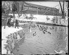 Man and two children feeding ducks that are swimming in a pond in Lincoln Park, 1915. DN-0064575A.