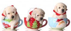 Christmas puppy photo session idea. {Pet Photography} {Dog}