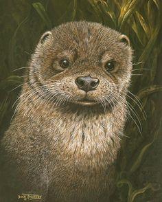 "The Art of Dick Twinney - Cornish Wildlife Artist .. ""Dog Otter"""