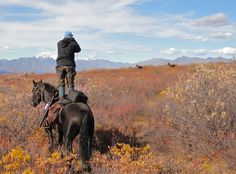 """Do you trust your horse to """"Stand""""? (Alaska-Yukon Moose)"""