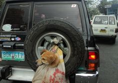 Image detail for -Baguio Dog Cruelty Animal Cruetly at its Best in the Philippines