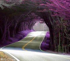 Purple Tunnel in Portugal