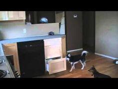 Genius Dog Gets The Treats
