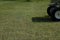 Rigenerazione di tappeti erbosi. La fase della semina del #fertilizzante.  http://www.coopagridea.org/
