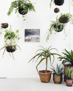 So Cool! Pflanzen, Die Von Der Decke Hängen. Schöne Dekoration Und ... Zimmerpflanzen Feng Shui Anordnen