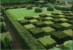 Clipped box & yew cubes
