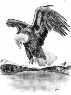 "drawings of american bald eagles | Charcoal Drawing – ""American Bald Eagle in Flight"""