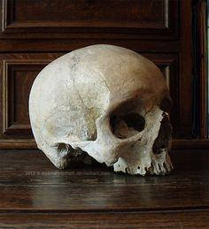 III. Skull Stock | 3/4 View by NaamahVonhell.deviantart.com on @DeviantArt