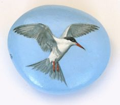 Finely detailed oil painting of a Common Tern (Sterna hirundo) on a pebble. 7cm x 6cm in black velvet presentation pouch. Sealed with acrylic non yellowing satin lacquer. A beautiful unique gift or collectors piece. I trained as a Scientific Illustrator and in the past have exhibited paintings at The Society of Wildlife Artists and Society of Equine Artists annual exhibitions. For a number of years I have been doing other things, but now would like to pick up again where I left off. When I…