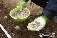 Мочевина (карбамид) как удобрение для огурцов, томатов, других овощных, плодово-ягодных культур, норма внесения и правильная дозировка, когда вносить и сколько….
