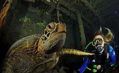 This is what the blue world off Waikiki, Oahu, Hawaii looks like. Overhead, surfers, giant sea turtles below.