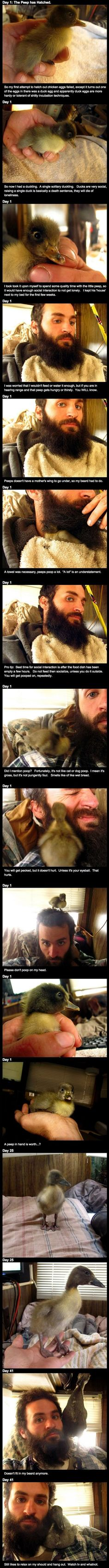 Baby duck takes shelter in awesome beard... Whaaaat?? Lol