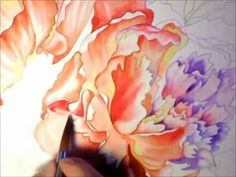 Pink Peonies - Watercolor Painting Time Lapse Process