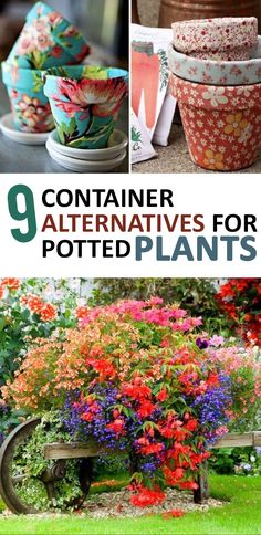 Container Gardening, Things to Do With Potted Plants, Potted Plant Tips, Unique Container Gardening Tips, Unique Container Gardening Ideas, Gardening Hacks, Gardening Tips and Tricks, Gardening 101, Popular Pin, Potted Plants