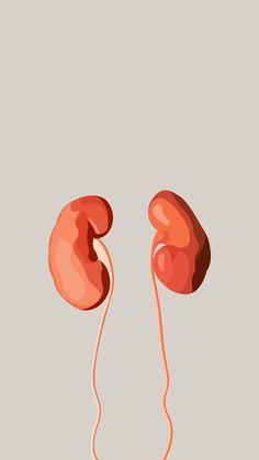 Medical Drawings, Medical Art, Medical Doctor, Human Anatomy Drawing, Anatomy Art, Kidney Anatomy, Medical Photography, Designer Wallpaper, Art Inspo