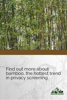 Yes, bamboo can take over your yard and half the neighborhood, but not if it's planted right. Find out more about bamboo, the hottest trend in privacy screening.