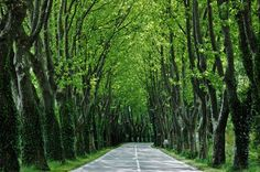 Scenic road in St-Remy-de-Provence, France...