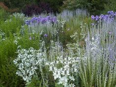https://flic.kr/p/oymfmK | limited palette | Eringium, Russian sage and Phlox are the three players here – just three plants repeated to create a fantastic effect, planted by the professionals at Wisley (Royal Horticultural Society gardens, UK). landscapingwithtesselaarplants.com/