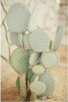 Oh cactus you ARE my favorite colors Cacti And Succulents, Planting Succulents, Planting Flowers, Garden Cactus, Cactus Flower, Agaves, Cactus Plante, Soft Autumn, Cactus Y Suculentas