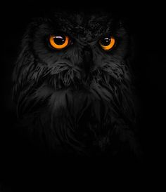 """free-spirit-the-soul-of-a-gypsy: """" phototoartguy: """" Eagle Owl by BlakeWphotography on Flickr ☛ http://flic.kr/p/o3yDVN """" """""""
