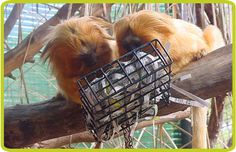 Phoenix Zoo Behavioral Enrichment