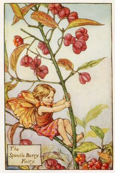 Broche Berry Flower Fairy Vintage Print, c.1927 Illustration de Cicely Mary Barker livres plaque
