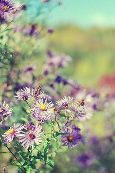 .summer flowers