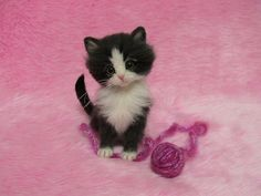 Needle Felted Cute Kitten with a yarn ball: Miniature Wool Felt Cat