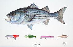 for Jamies fishing room Fishing Jig, Boy Fishing, Fishing Rods And Reels, Rod And Reel, Fishing Boats, Fishing Lures, Fishing Stuff, Brookville Lake, Lake Texoma