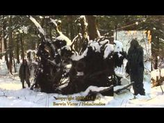 Sasquatch In The Woods And The Story Of Consistent Sightings - YouTube
