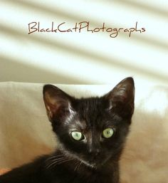 Animal photo black cat picture kitten 5x7 by BlackCatPhotographs, $15.00