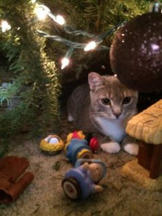 Cats in Nativity Scenes | Funny Cat Christmas Pictures (Page 2)