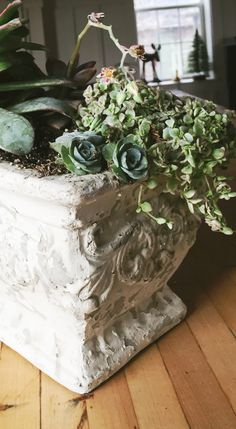 Decorating with Succulents - Chels Lynn Blog