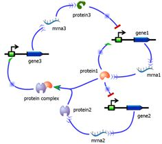 Synthetic Gene Circuit Designed By TinkerCell. Credit: Jeff Johnson, Graduate Student, UCSF