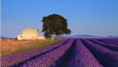 Guided Daytrip in Provence: Villages in Lubéron and Lavender's Discovery - by TGV from Paris