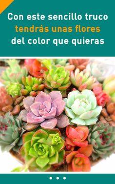 Con este sencillo truco tendrás unas flores del color que quieras