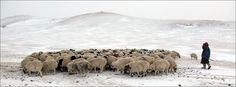 "Winter ""Pasture Land"" Panorama (Mongolia) by Karl Schuler"