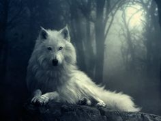 Forest, wolf, black-and-white, animals, dark, night, amazing