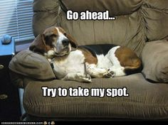 Just try to move that basset! Lol